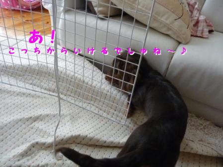 コピー ~ P1030186
