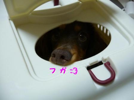 コピー ~ P1030365