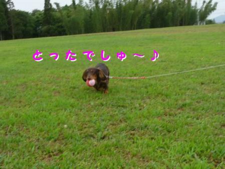 コピー ~ P1030657