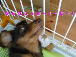コピー ~ P1040219