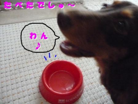 コピー ~ P1040203