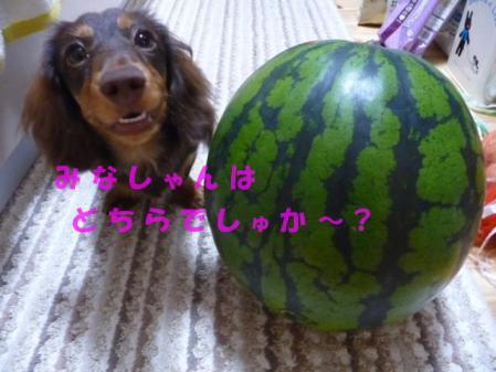コピー ~ P1040516