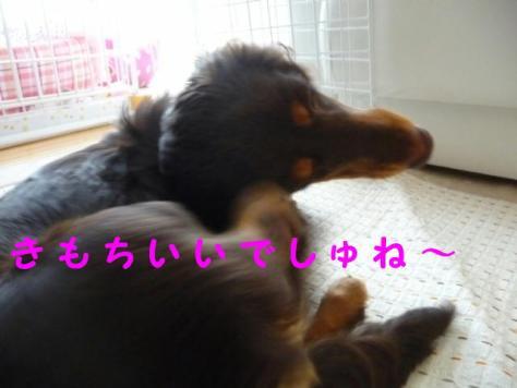 コピー ~ P1060237