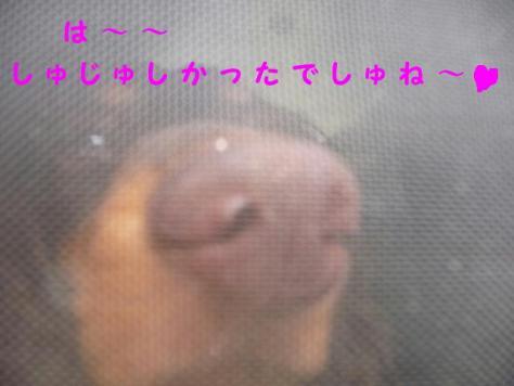 コピー ~ P1060868