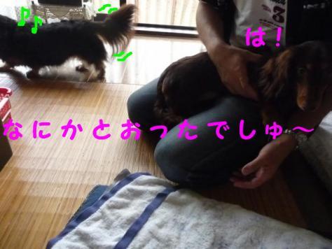 コピー ~ P1060918