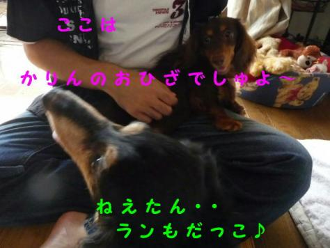 コピー ~ P1060922