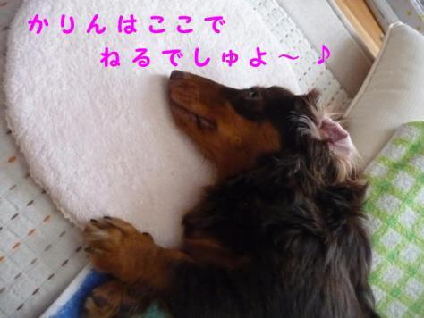 コピー ~ P1070624