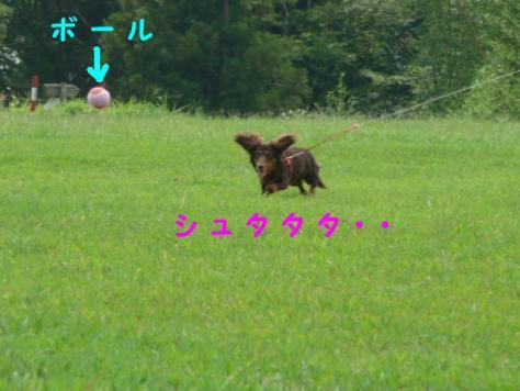 コピー ~ P1070800