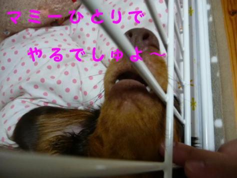 コピー ~ P1080083
