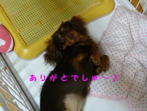 コピー ~ P1080001