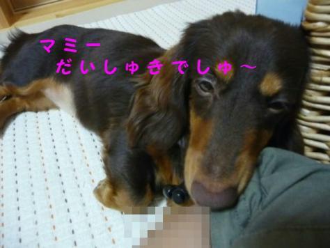 コピー ~ P1080136