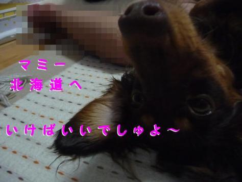 コピー ~ P1080582
