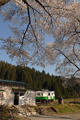 sakunaka001.jpg