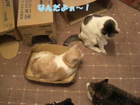 CIMG4697.jpg