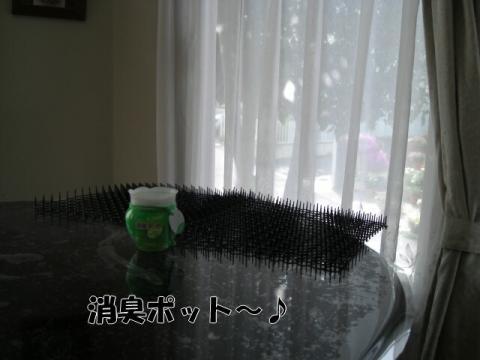 CIMG4966.jpg