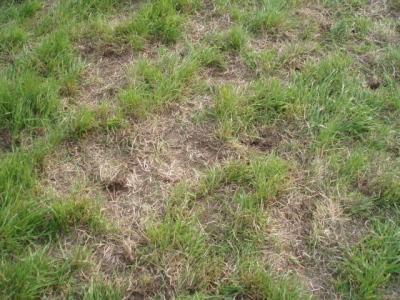 芝はぼこぼこ