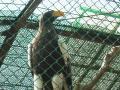 徳山動物園⑥