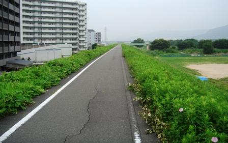 802sairo.jpg