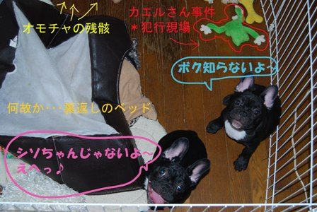 DSC_00111111111.jpg