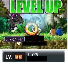 Maple0001_20080722000242.jpg