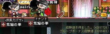 Maple0002_20080423002816.jpg