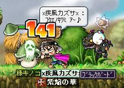 Maple0058.jpg