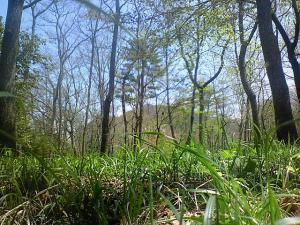 080419虫の目から雑木林
