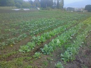 080430春野菜
