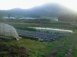 080504夏野菜畑