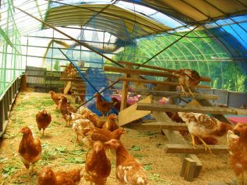080530鶏ハウス
