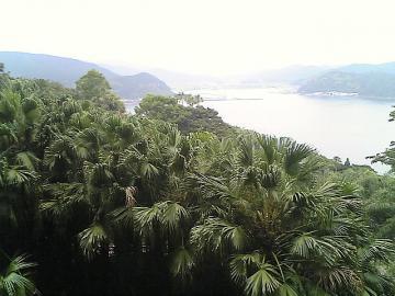 亜熱帯ウォークラリー