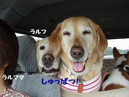 また車の中の写真です。