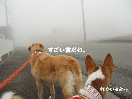 やはり朝霧だった・・