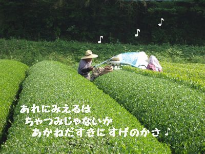今年も美味しいお茶が飲めそうです。