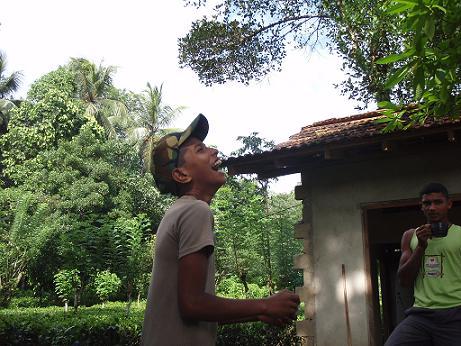 屋根を食べる