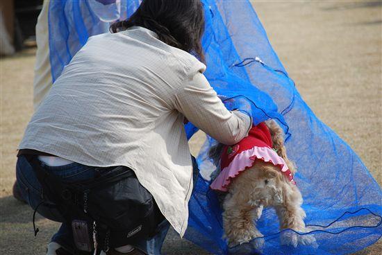 2008_03埼玉コッカーオフ会 170_R