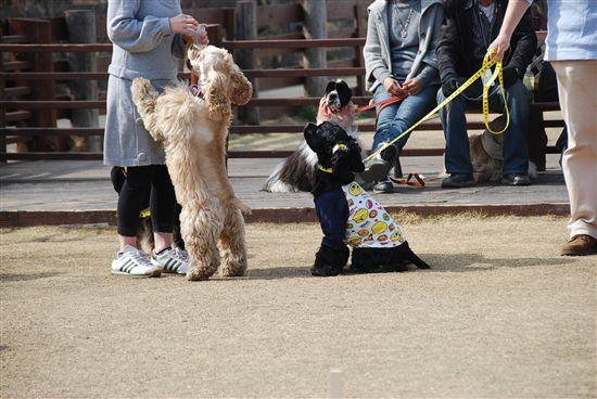 2008_03埼玉コッカーオフ会 173_R