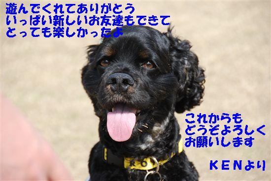 2008_03埼玉コッカーオフ会 070_R
