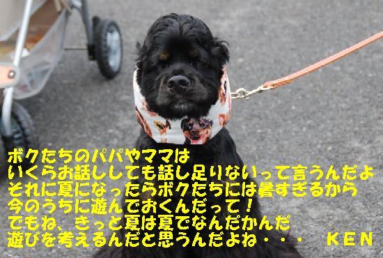 2008_05ドッグランフェスタ 133b