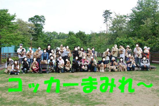 2008_05埼玉コッカー 233_R