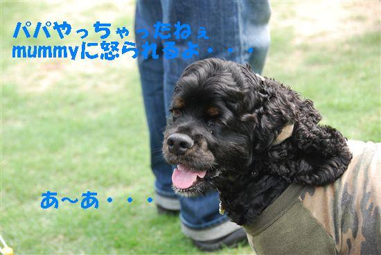 2008_05埼玉コッカー 212_R