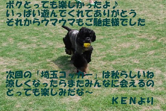 2008_05埼玉コッカー 164