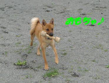 doggurann5