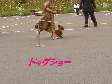 dogsho-