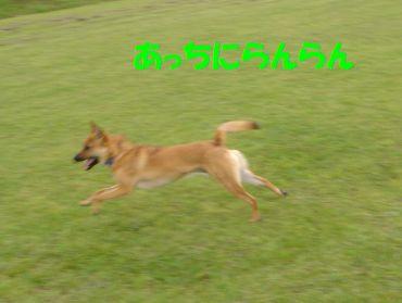 goushizawa2