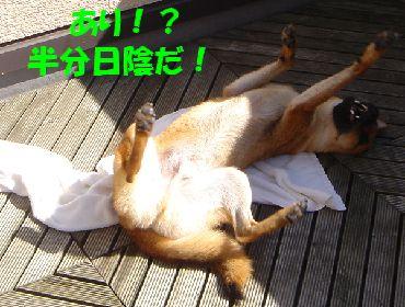 shizennkannsou3