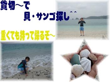 P6010156.mix 貝.サンゴ探し