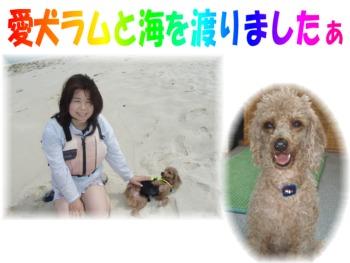P6220272.mix 愛犬ラム