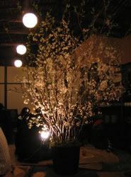 クレハルツキノハナノエン 桜