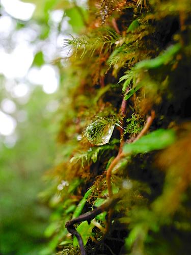 奄美の原生林